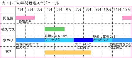 カトレア年間管理表