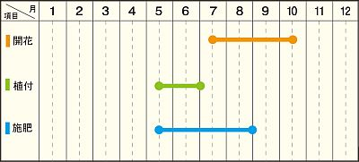 夜顔年間管理表