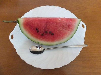2016裏庭夏6.jpg