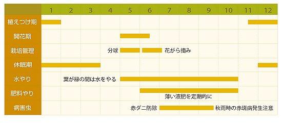 アマリリス年間管理表